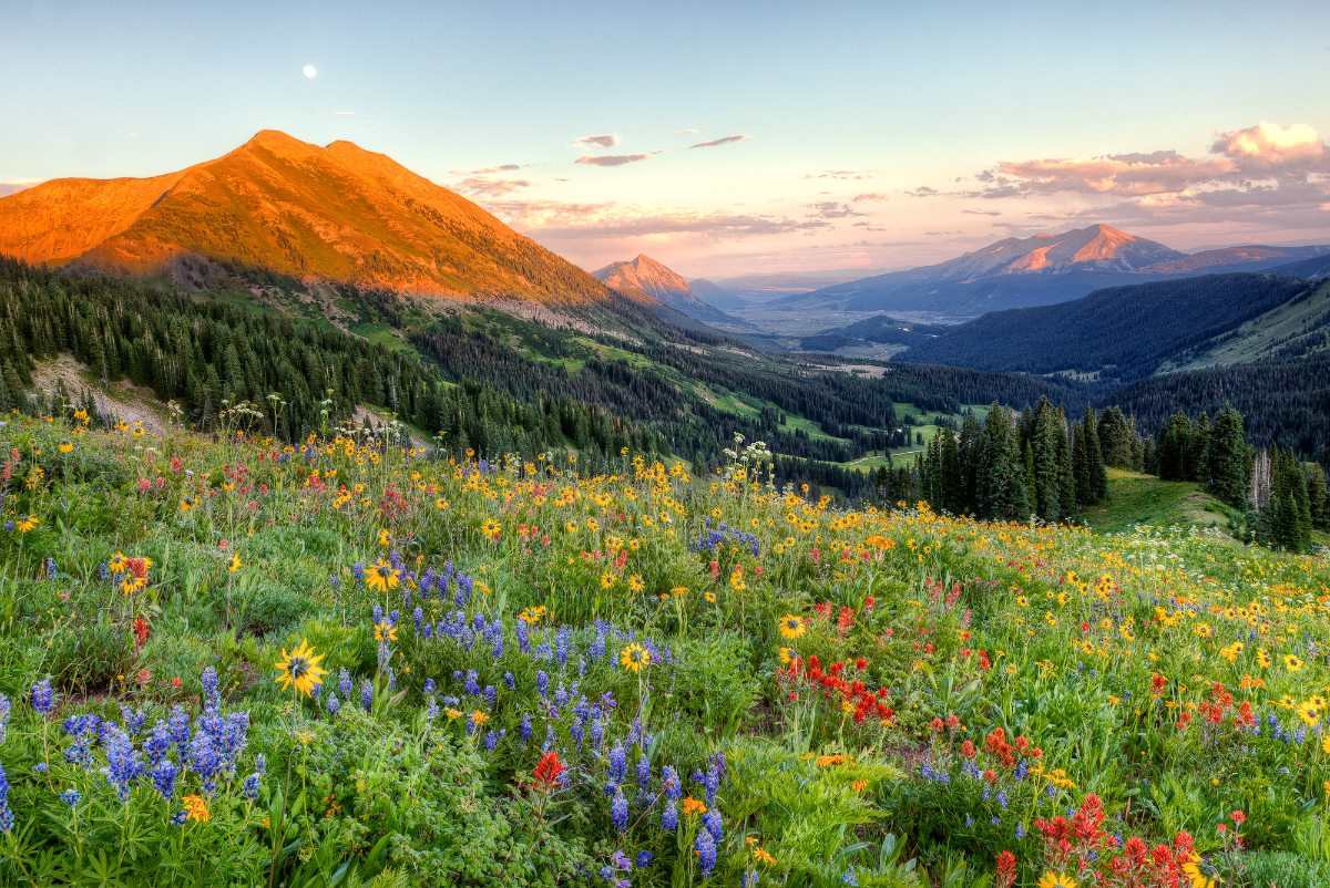 Wildflower_Moonrise_V2_1116.jpg