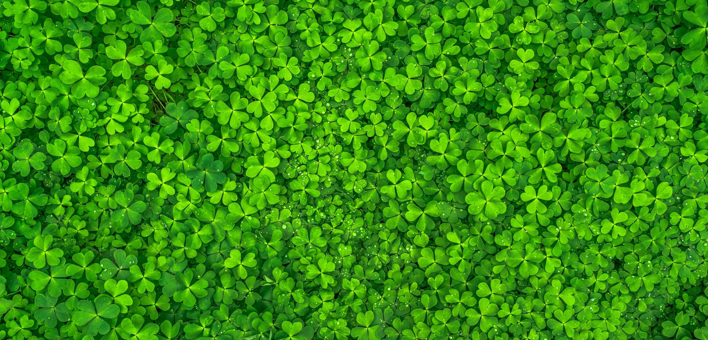 leaf-nature-green-spring-158780-1